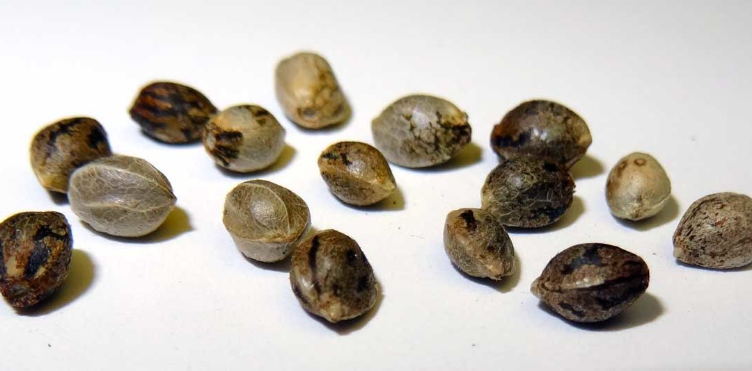 Buying Cannabis Seeds: How To Buy Marijuana Seeds