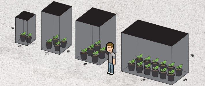 Grow cannabis in grow tent guide by size