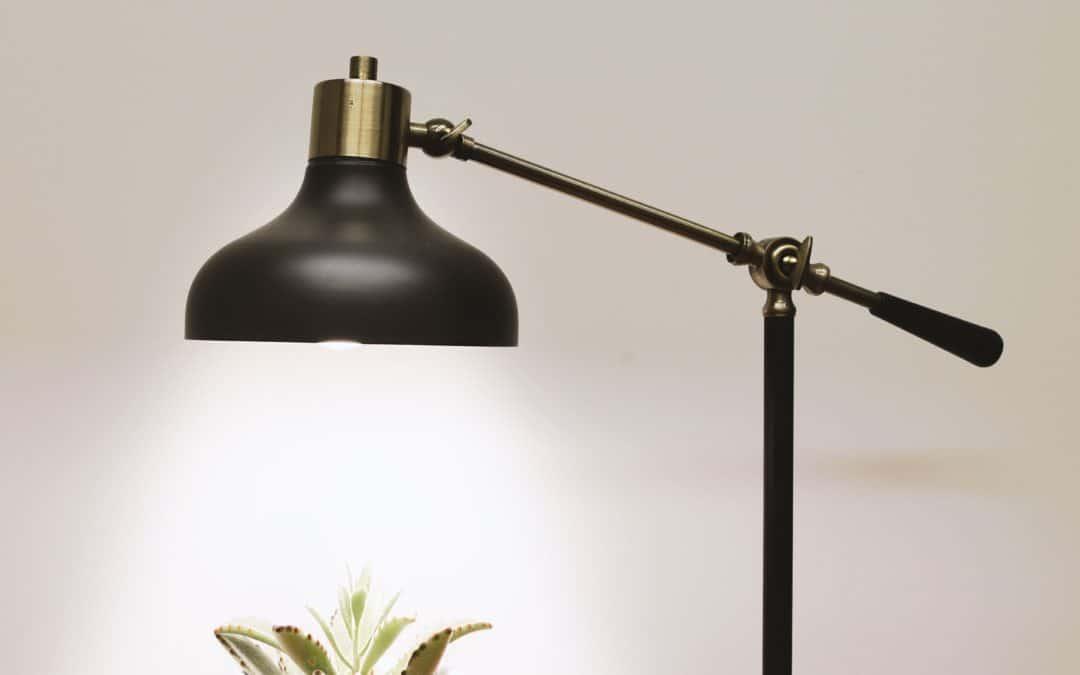 Can You Use a Regular Lamp to Grow Marijuana?